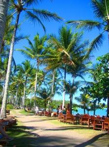 Corredor de coqueiros que liga todos os restaurantes boutique na beira da Praia do Espelho